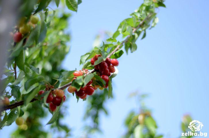 cherrylilly007