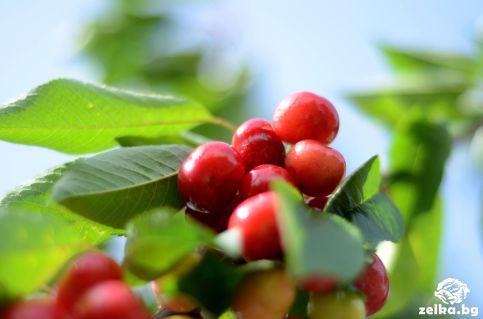 cherrylilly010