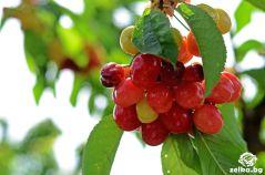 cherrylilly011