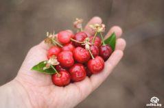 cherrylilly012