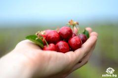 cherrylilly013