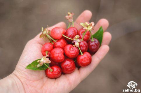cherrylilly014
