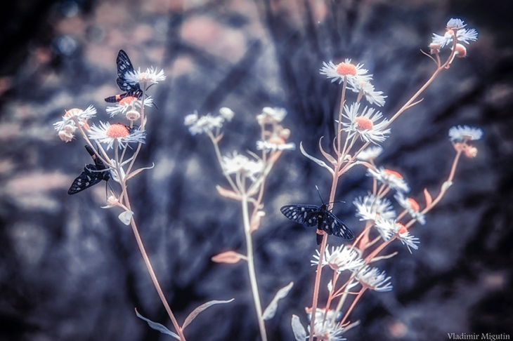 chernobyl-hpotographs-infrared-vladimir-migutin-11-5a74731f7b369__880