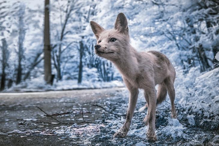 chernobyl-hpotographs-infrared-vladimir-migutin-2-5a747305e2b14__880